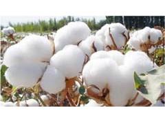 2018年棉花市场回顾与2019年展望