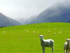 气候干燥影响澳洲棉花和羊毛的产出量